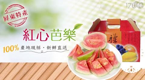 家購網嚴選 屏東特產紅心胭脂芭樂 5斤禮盒(8-11顆/盒)含人體無法製造的茄紅素 熱量低且含有豐富的纖維質、維生素C.
