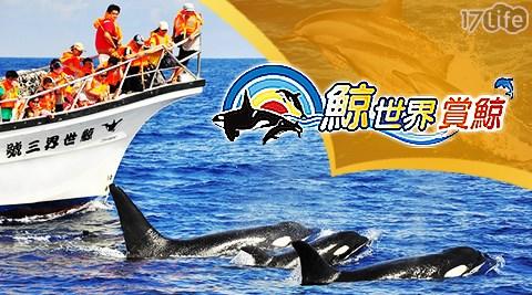 鯨世界賞鯨/賞鯨/海豚/浪花/海洋/親子/暑假/假日不加價/活動/門票