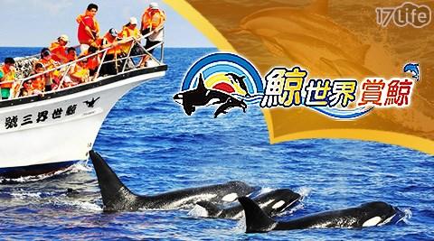 活動/門票/鯨世界賞鯨/鯨世界/賞鯨