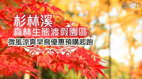 杉林溪森林生態渡假園區/杉林溪/楓葉/櫻花/自然/森林/渡假