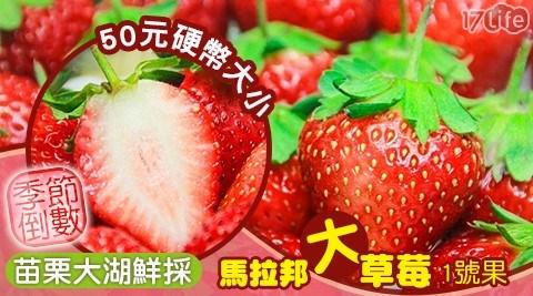 水果/苗栗/大湖/草莓/馬拉邦/大草莓/1號果/大顆/季節/限定/產季/台灣/臺灣/在地/煉乳/甜點/下午茶/果汁/蛋糕