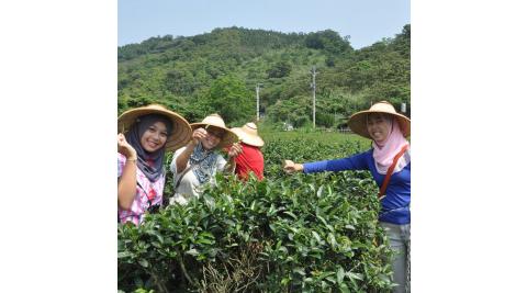 宜蘭冬山-鵝山茶園有機體驗農場(手工採茶及製茶DIY)