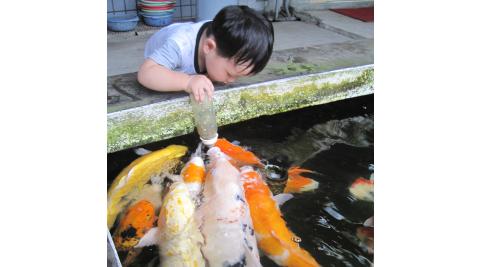 宜蘭冬山-童話村生態渡假農場(平日六人二日遊)