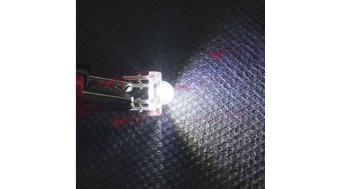 食人魚5mm高亮度LED-白光(100pcs入)