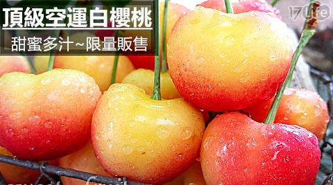 空運頂級華盛頓特甜白櫻桃(9.5R~10.5R)
