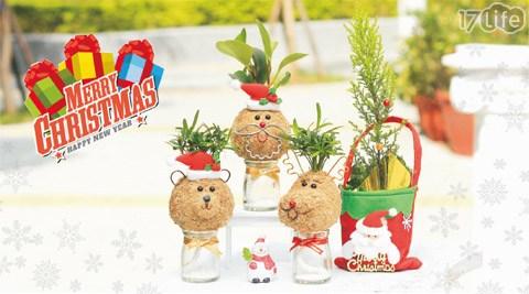 溫心/耶誕/幸福/禮物/植栽/植物/居家