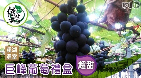 綠安生活/溪湖/溫室/巨峰葡萄/巨峰/葡萄/禮盒/溫室巨峰葡萄