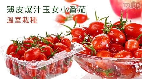 溫室栽種/薄皮爆汁玉女小番茄/玉女小番茄/小番茄/小蕃茄/玉女小蕃茄/溫室小番茄