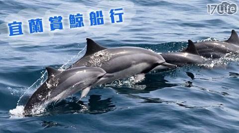 宜蘭/賞鯨/船行/宜蘭賞鯨船行/龜山島/頭城賞鯨/烏石港賞鯨