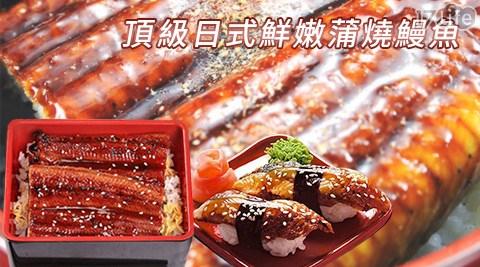 頂級日式鮮嫩蒲燒鰻魚/蒲燒鰻魚/鰻魚/鰻/魚
