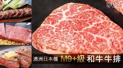 極鮮配/澳洲日本種M9/M9/澳洲牛/牛肉/和牛/牛排/烤肉/火鍋料