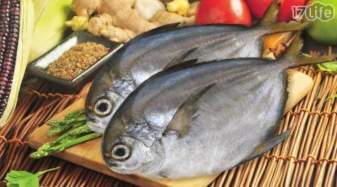【漁季】野生鮮嫩黃尾鯧魚(300g)
