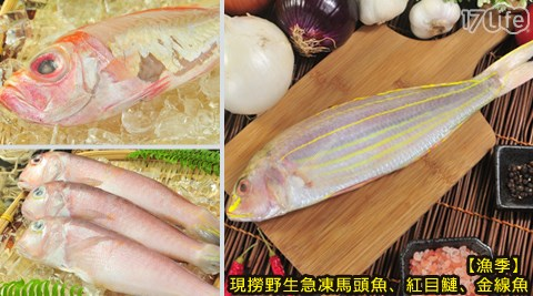 漁季/現撈/野生/急凍/馬頭魚/紅目鰱/金線魚