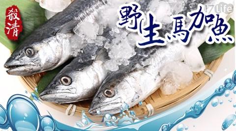 愛上新鮮/野生殺清馬加魚/DHA/海鮮/水產/漁貨/魚排/生鮮/魚