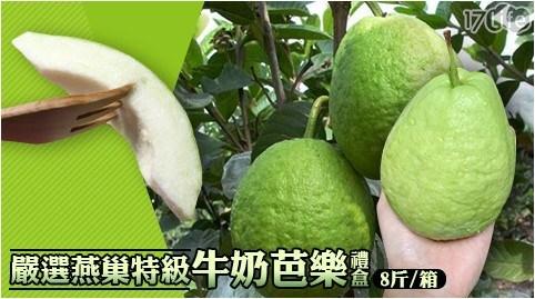 嚴選燕巢特級牛奶芭樂禮盒(8斤/箱)