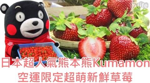萬眾期待的草莓終於來了!【日本超人氣熊本熊Kumamon】空運限定,超萌部長融化心頭,酸甜好滋味~