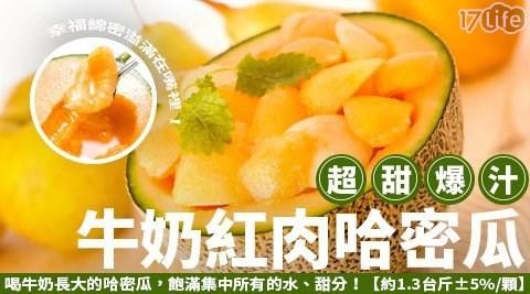 超甜爆汁網紋牛奶紅肉哈密瓜