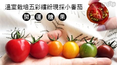 溫室栽種五彩開運糖果小番茄