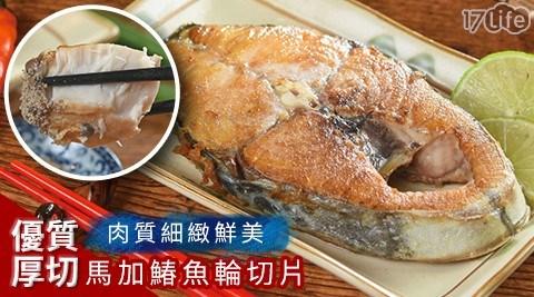 嚴選優質厚切馬加鰆魚輪切片/魚片/馬加鰆魚/厚切/海鮮/鰆魚