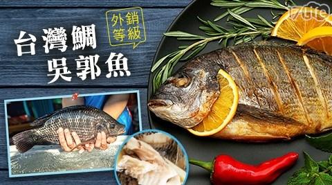 外銷等級台灣鯛吳郭魚