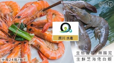 台灣第一【原川水產】生態養殖-無腸泥生鮮白蝦,生產追朔認證,無腸泥、無藥殘,CP值之王,吃的健康安心