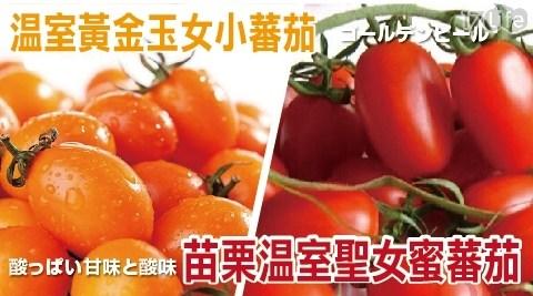 水果/消化/茄紅素/沙拉/輕食/季節/溫室黃金玉女小蕃茄/苗栗聖女蜜蕃茄/蕃茄
