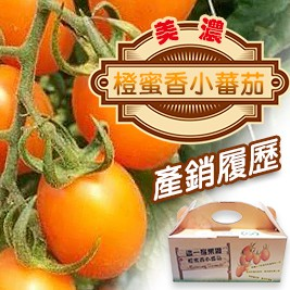獨家優惠【產銷履歷】美濃橙蜜香小蕃茄