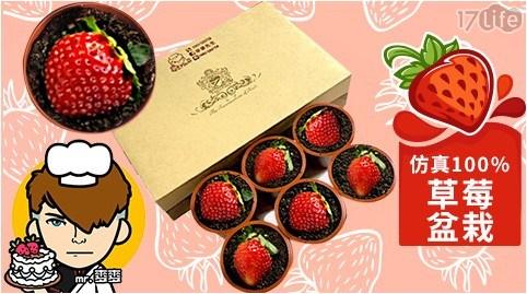 草莓盆栽/甜點/糕點/下午茶/麥麥先生/蛋糕
