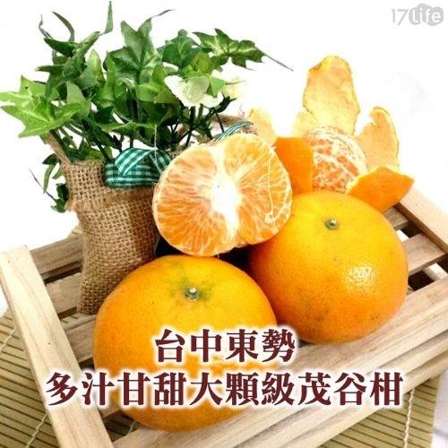 台中/茂谷柑/柑/橘子/多汁/水果/送禮/東勢/冬季/台灣/在地/腸胃/維他命C