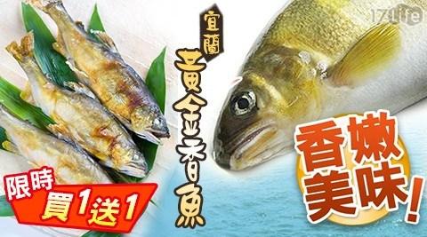 【雙12限定買一送一】宜蘭黃金香魚