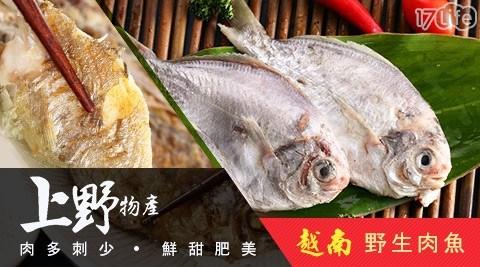 上野物產/海鮮/魚/肉魚/晚餐/煎魚/烤魚/野生